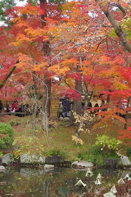 放生池越しに見た永観堂庭園内の紅葉
