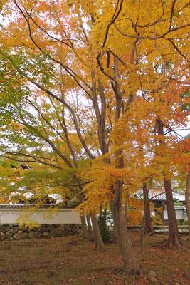 南禅寺境内の鮮やかな黄葉