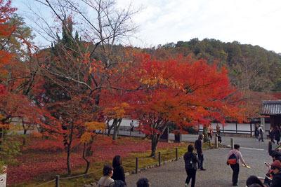 南禅寺三門裏の紅葉の様子