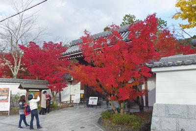 紅葉の名所・永観堂南門の楓紅葉