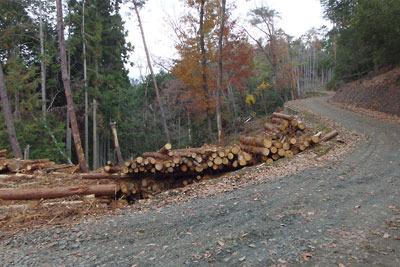 東山稜線傍の林道と周辺から伐り出された材木