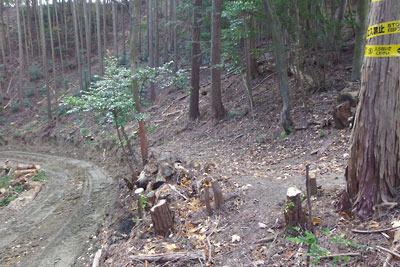 山科川源流方向から安祥寺山北鞍部へ迫る作業道(左)により切断された山科・大文字山を結ぶ古道(右)