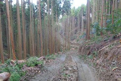 山科と大文字山を繋ぐ古道を破壊して下部へと続く作業道