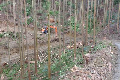 安祥寺山北の山腹を破壊する林野庁の作業道とその分岐に置かれた重機