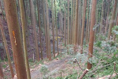 安祥寺山北山腹の作業道分岐付近から谷底に見えた重機