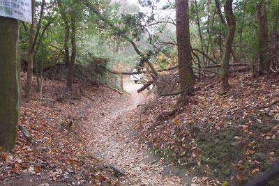 稜線西下に造られた新林道と作業場により破壊・途絶させられた大文字山南の古道または竪堀跡