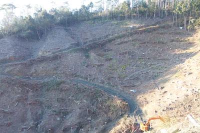 安祥寺山西側の国有林内で行われている林野庁の皆伐作業により荒れた山肌とそこを刻む作業道及びショベルカー(休止中)