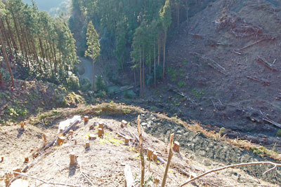 安祥寺山西側の国有林内で行われている林野庁の皆伐作業により荒れた山肌とそこを刻む作業道