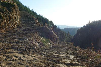 つづら折りで山肌を切り削り急斜を登るように付けられた安祥寺山西側の作業道