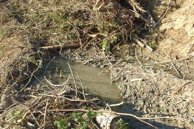 安祥寺山西斜面の谷を横断する伐採作業道により生じた崩落の危険がある泥濘