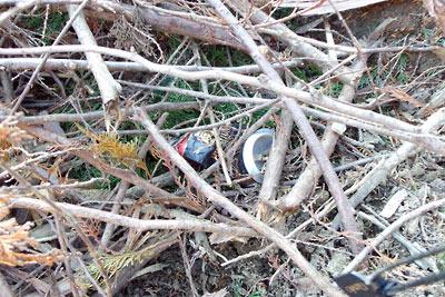安祥寺山西側伐採地の柴山に投棄された空き缶