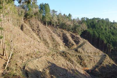 重機で方々道を切られ皆伐された安祥寺山西の谷地