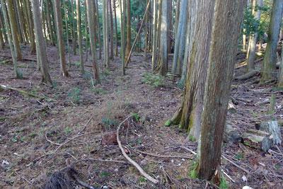 大文字山と安祥寺山の間に設けられた貯木場下の平坦地に伸びる盛土古道