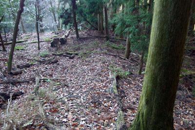 如意寺「宝厳院」跡と推定されている平坦地に盛土状で続く古道