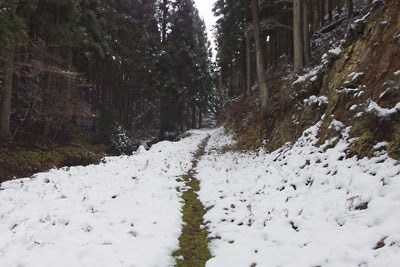 京都・雲取山中の三ノ谷林道に積る雪