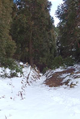 雲取峠から南の一ノ谷に下る道の入口部分