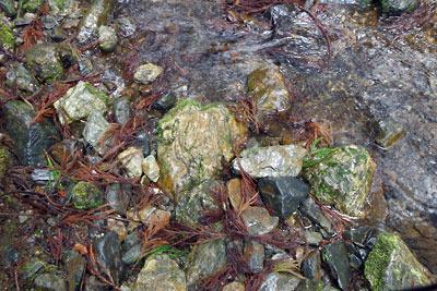 京都・雲取山の一ノ谷の沢に散らばるチャートらしき岩石