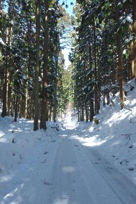 雪が載って危険な芹生峠北側の道