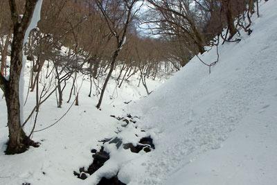 芹生三ノ谷支流沢に雪崩れる雪の急斜面