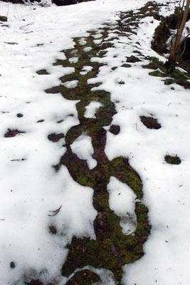 溶け残る雪に印されたワカン(かんじき)歩行の跡(京都・雲取山山中)