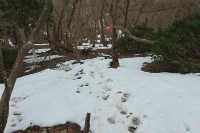僅か3日で雪が激減した京都・雲取山の山頂北面