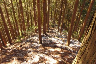 京都・雲取山南尾根の道なきルート