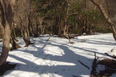 京都・雲取山山頂北裏の斜面に残る疎らな残雪