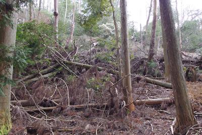 新林道傍の伐採木置場の残骸で塞がれた推定如意古道