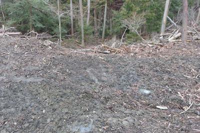 新林道から見た、推定如意古道を途絶させた伐採木置場とその放置残骸
