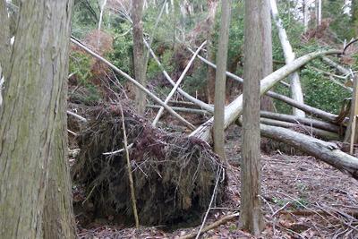 倒木で荒れる檜尾古寺推定地
