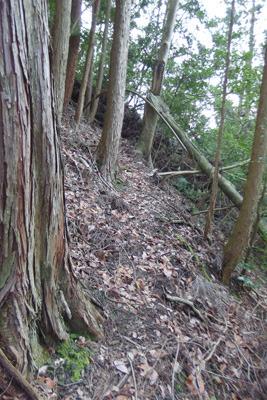 檜尾古寺推定地の東の尾根横に続く獣道状の古道?
