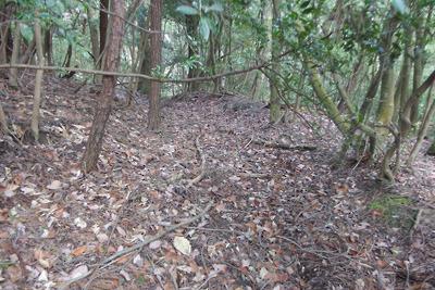 本来の如意古道と思われる、如意ケ嶽山中の尾根突端付近で見つけた幅半間以上の道跡