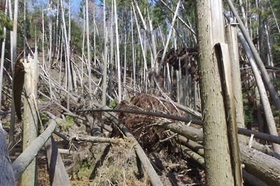 平成30年台風による凄まじい倒木で荒れる如意寺・深禅院推定地