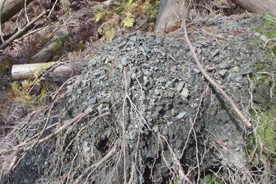 如意寺・深禅院推定地西の谷地で見た倒木の根に付く軟弱表土