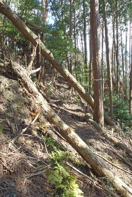 倒木に阻まれながらも深禅院推定地へと続く古道