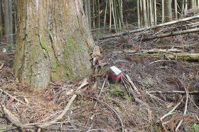 深禅院推定地東の広谷にあった境界木らしき大木と古い境界石