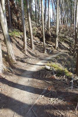 如意ケ嶽稜線付近に続く現在の如意越古道