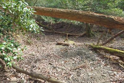 深禅院推定地東の広谷から東に続く1間幅程の掘り込み地形