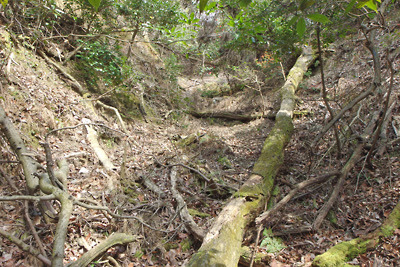 深禅院推定地東の広谷から続く一定幅・一定傾斜で上方へ続く人為地形