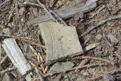 如意寺東門推定地跡の倒木の根の土から出土した須恵器らしき遺物