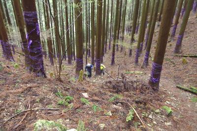 御池岳滋賀側登山口から鞍掛峠に向かい植林地内の急登を進む