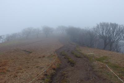 鞍掛峠と御池岳を繋ぐ道上に現れる杉苔が多い広尾根