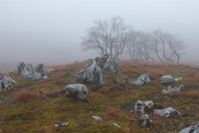 鈴鹿山脈・御池岳山上に散る草原の羊のような石灰岩