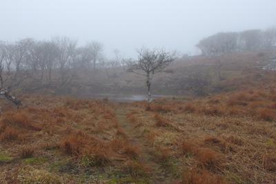 御池岳山上最大の池「元池」とそこへ続く道