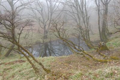 御池岳山上森なかで出会った「中池」らしき池沼