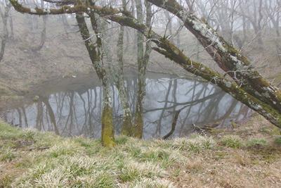 御池岳南方西縁で遭遇した「幸助の池」とみられる池