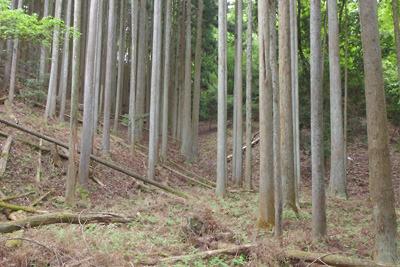 鹿ケ谷上方・大文字山中の如意寺(にょいでら)宝厳院跡の平坦地と、その奥に続く古道候補地の谷