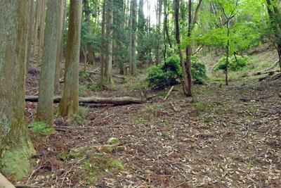 如意寺宝厳院推定地南から稜線へと続く、古道候補地の浅く広い谷