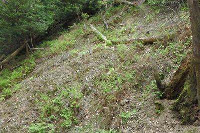如意寺・宝厳院推定地南の浅谷上部を覆う崩落土