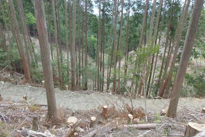 東山稜線から見た安祥寺山国有林の風倒木皆伐現場